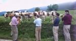 Las vacas producen más leche escuchando música clásica