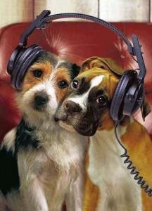 beneficios de la musica en los animales